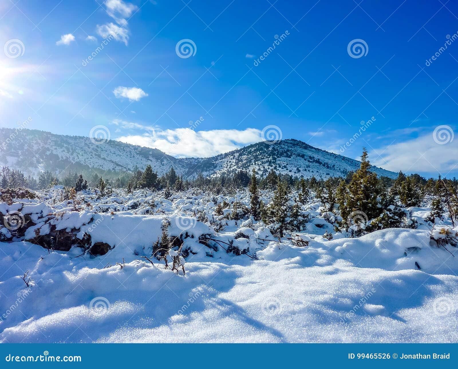 Baumfeld und -schnee