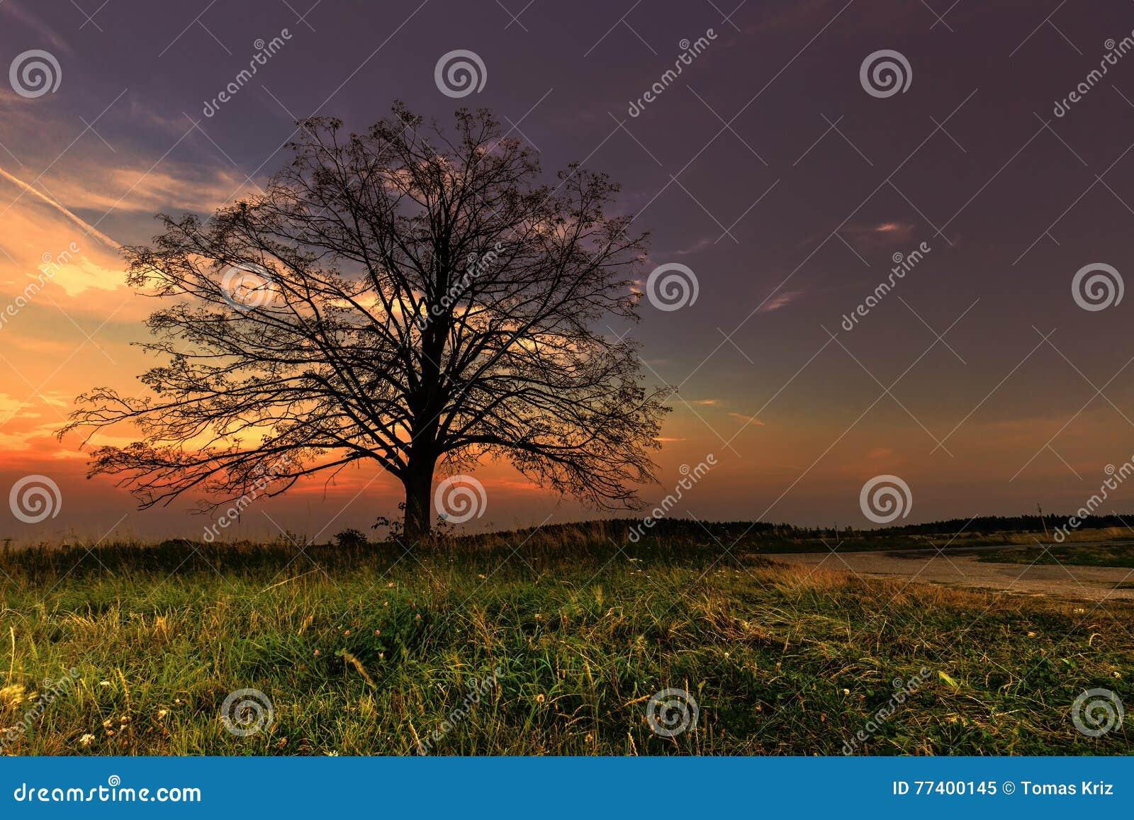 Baumschattenbild und ein bunter Sonnenuntergang