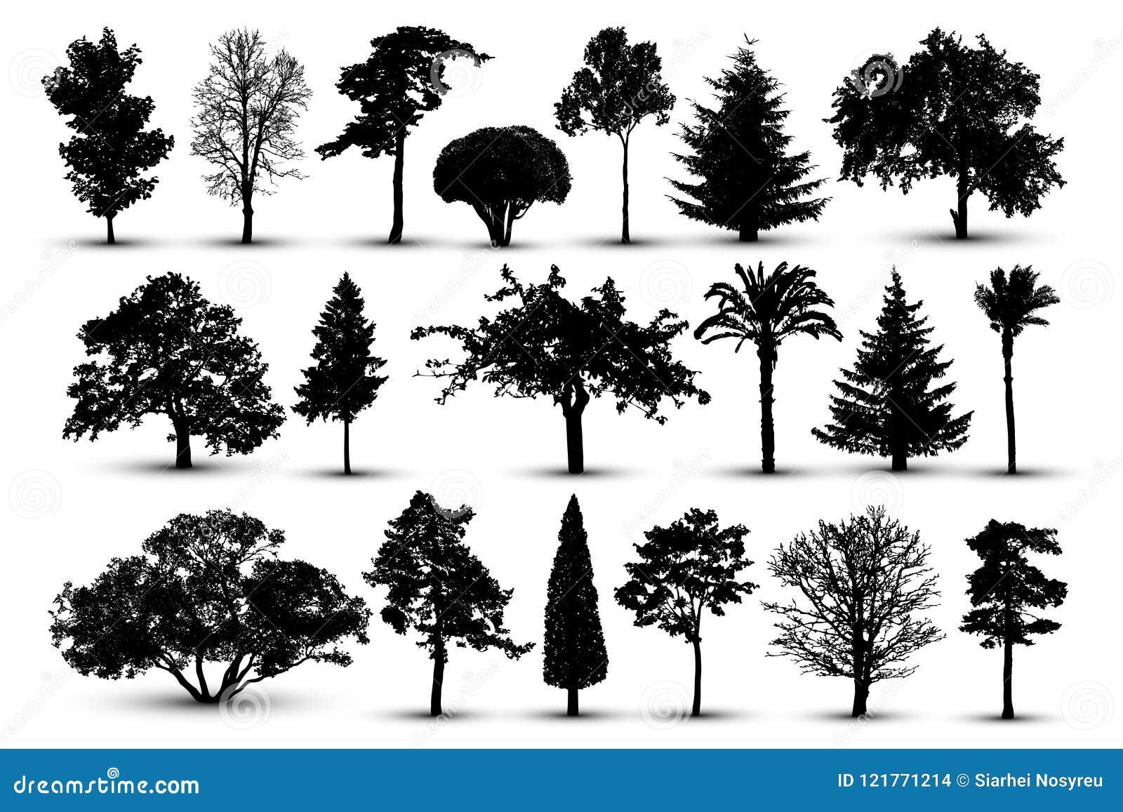 Baumschattenbild, Waldvektor Natur-Park Lokalisierter Satz, Baum auf weißem Hintergrund