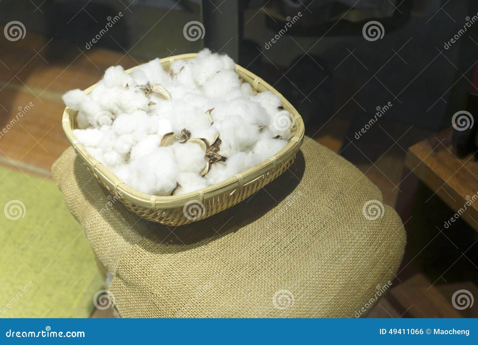 Download Baumwollblumen stockfoto. Bild von landwirtschaft, kapsel - 49411066