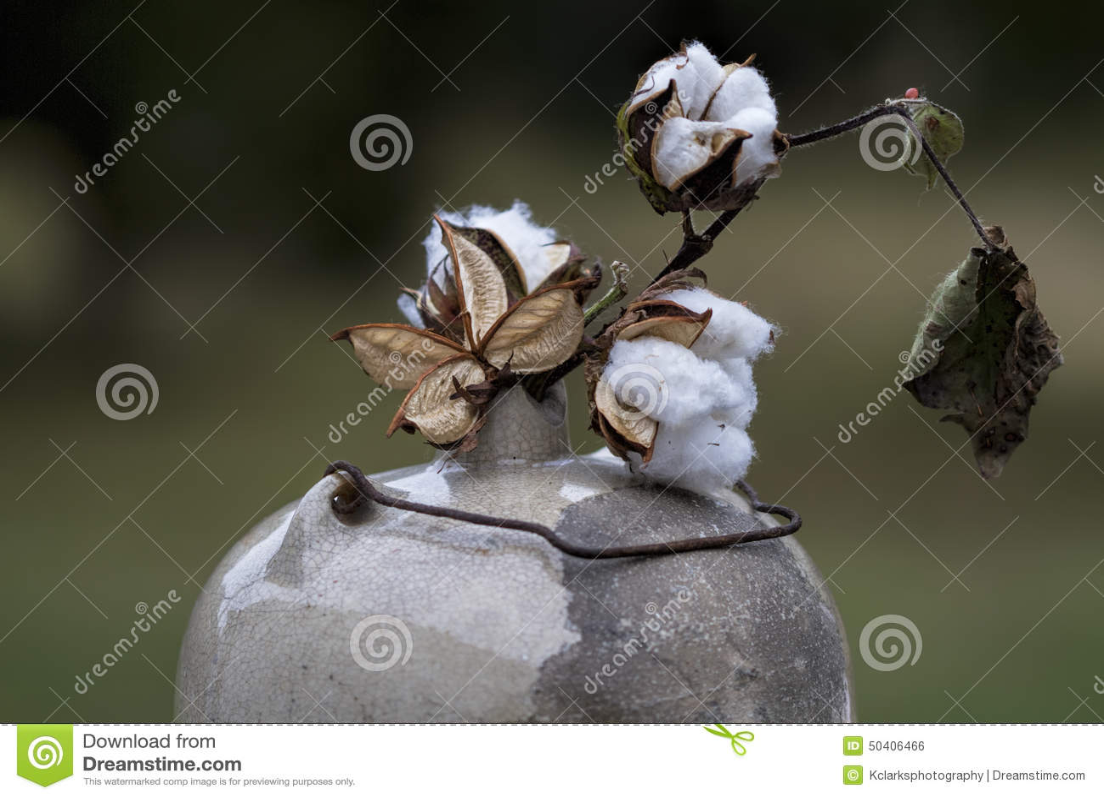 Baumwollkapseln in antikem Mondenschein-Krug 2