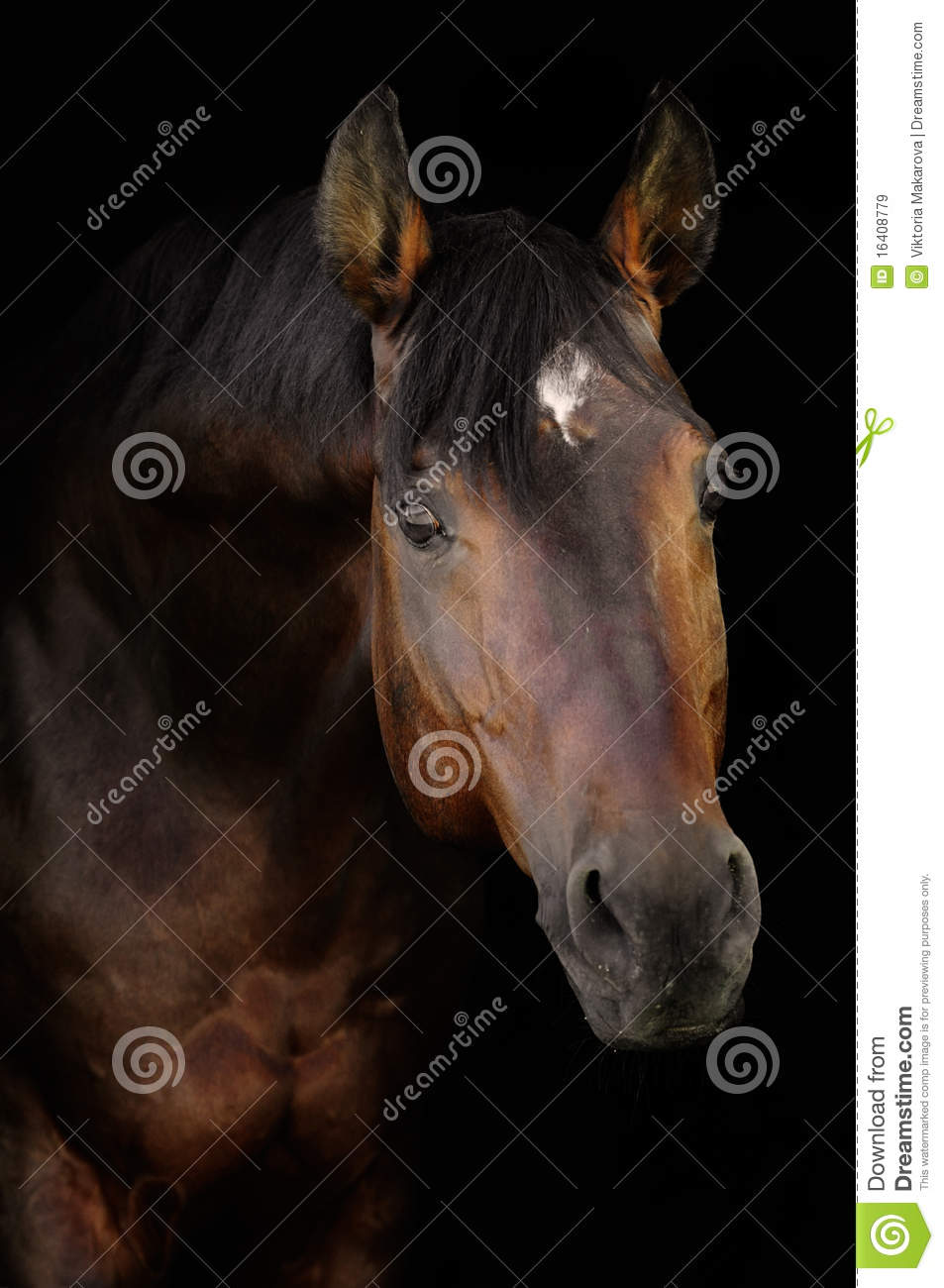 Bay horse in darkness