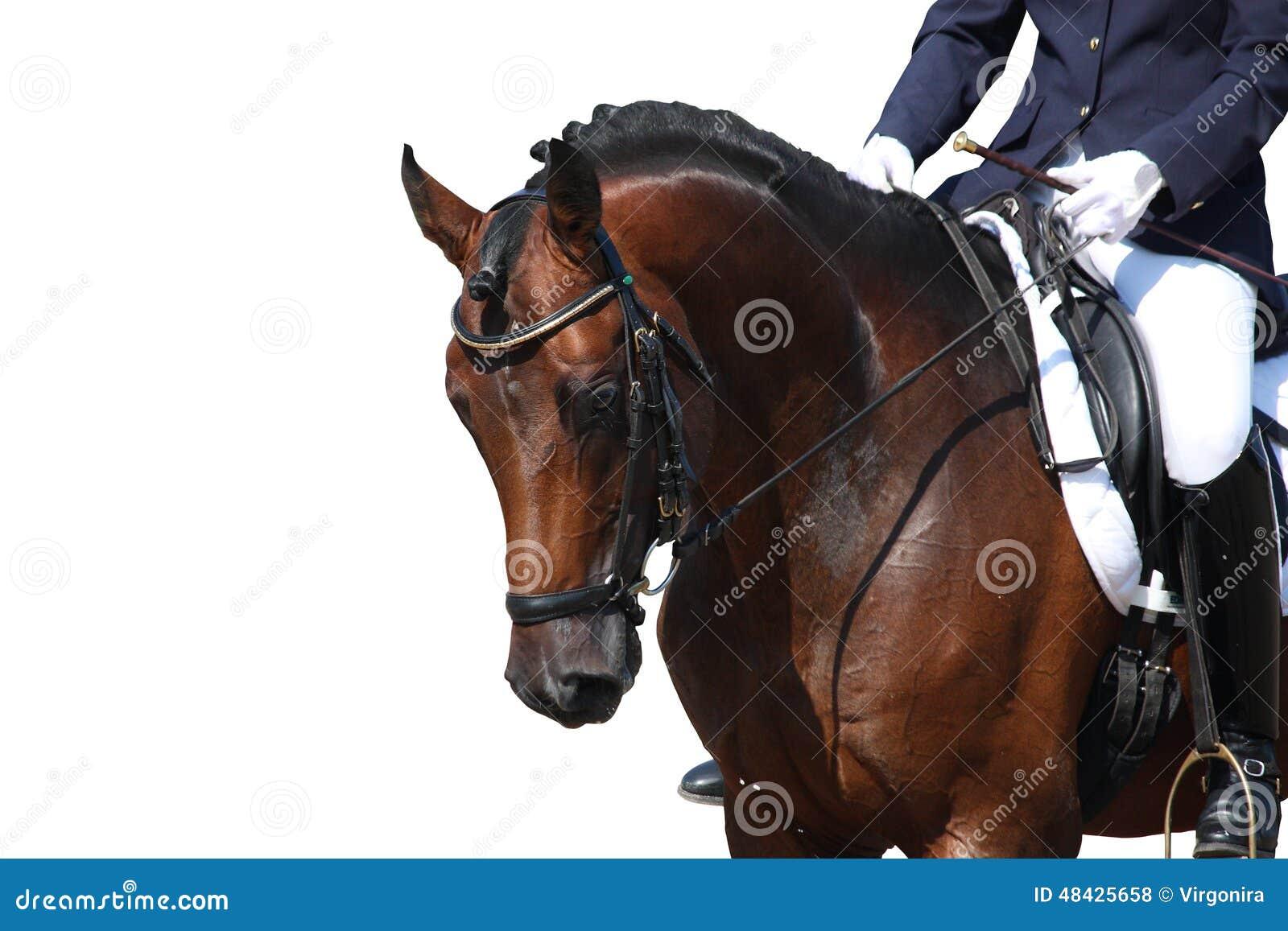 Bay horse portrait isolated on white