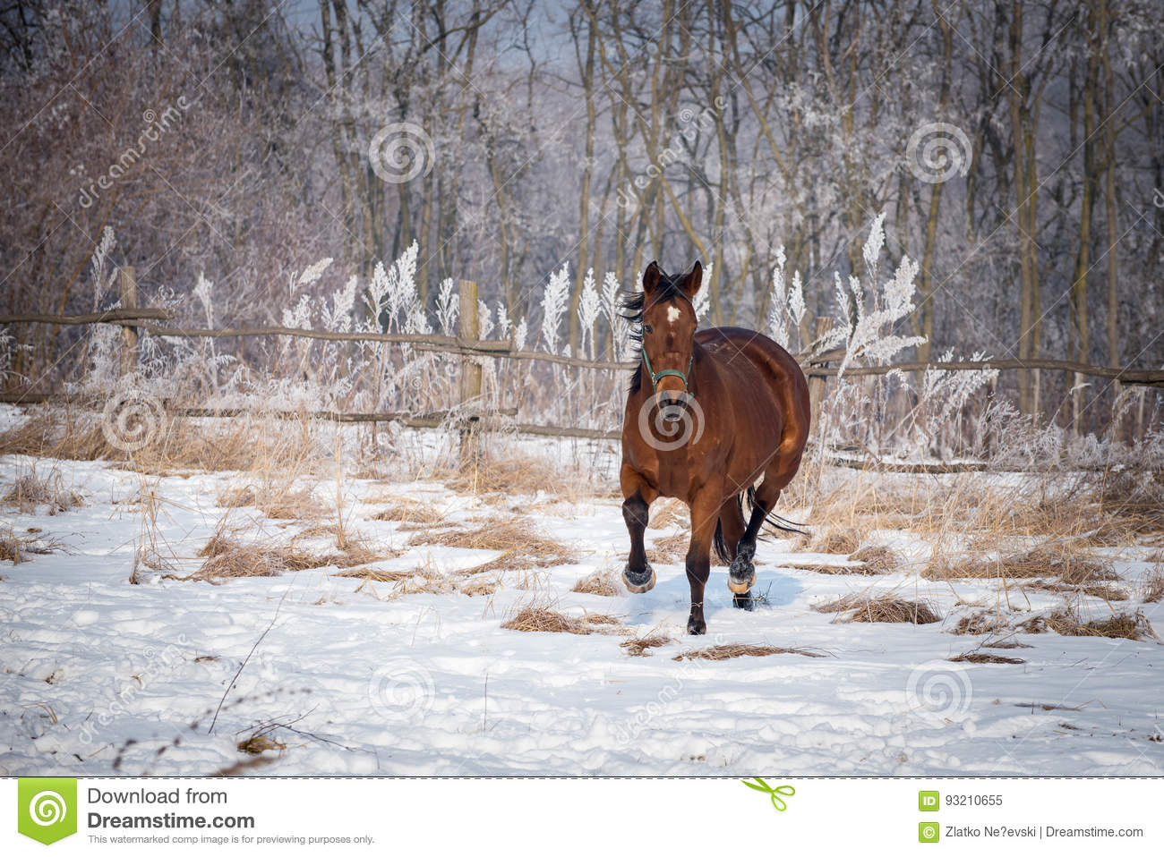 Bay horse on the snow