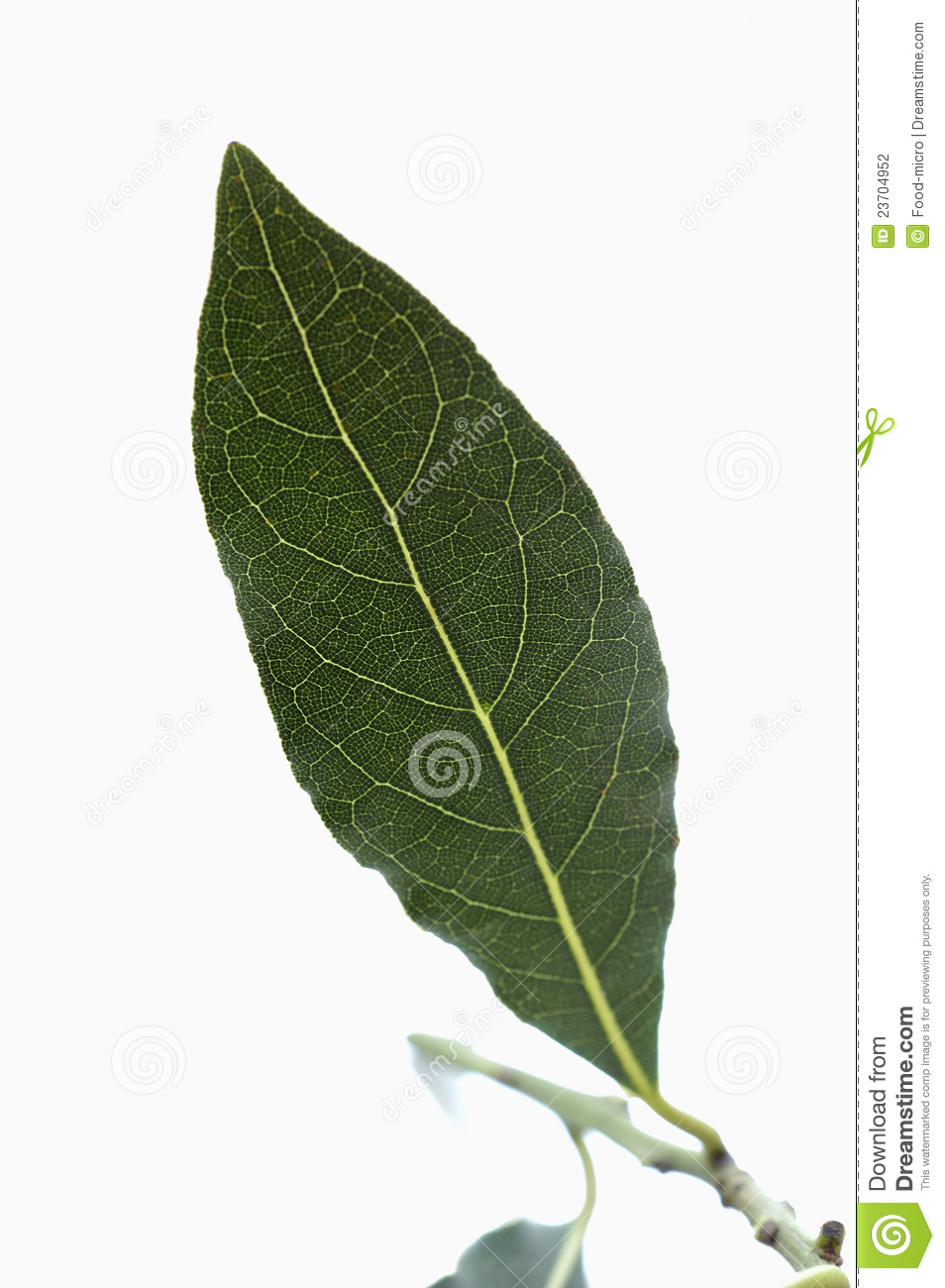 Bay leaf stock photography image 23704952 - Cook bay leaves ...