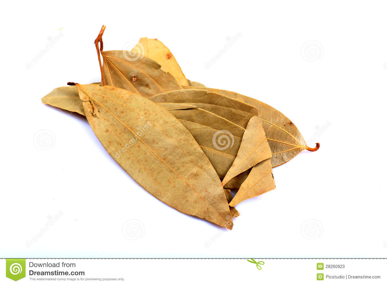 Bay leaves stock photos image 28260923 - Cook bay leaves ...