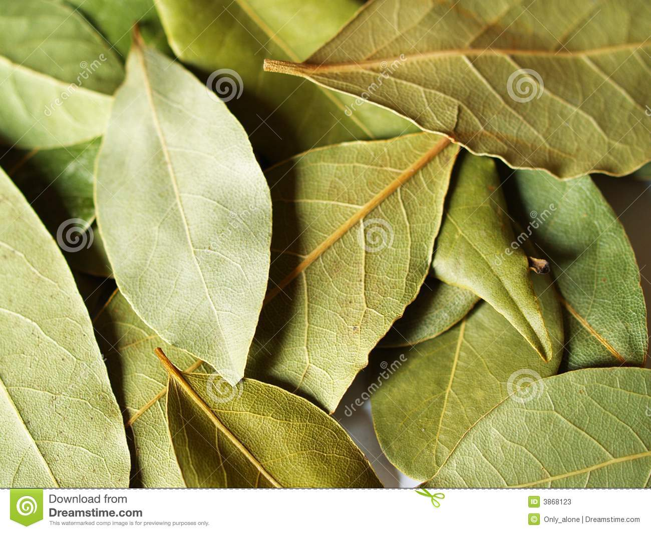 Bay leaves for cooking stock photos image 3868123 - Cook bay leaves ...