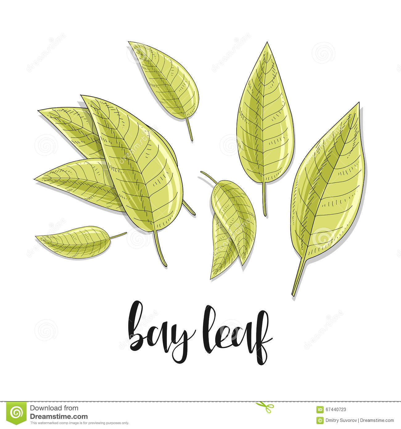 Bay leaves isolated object sketch spice for food culinary seasoning stock vector image 67440723 - Cook bay leaves ...