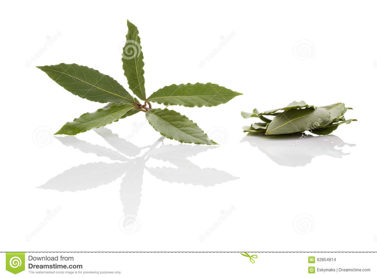 Bay leaves stock photo image 62854814 - Cook bay leaves ...
