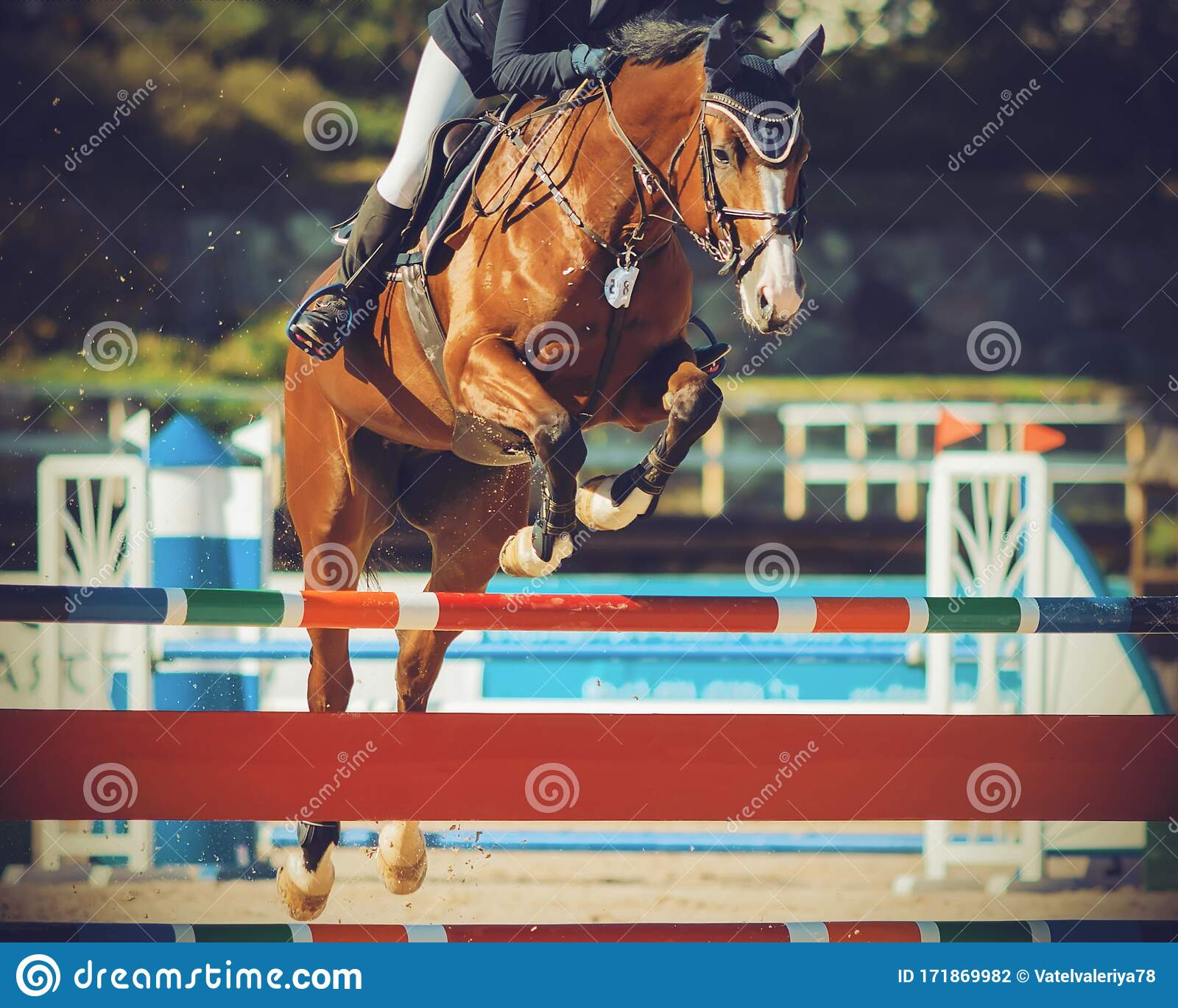 A Bay Racehorse Jumps Over A High Barrier Participating In Show Jumping Competitions On A Sunny Summer Day Stock Photo Image Of Animal Competition 171869982