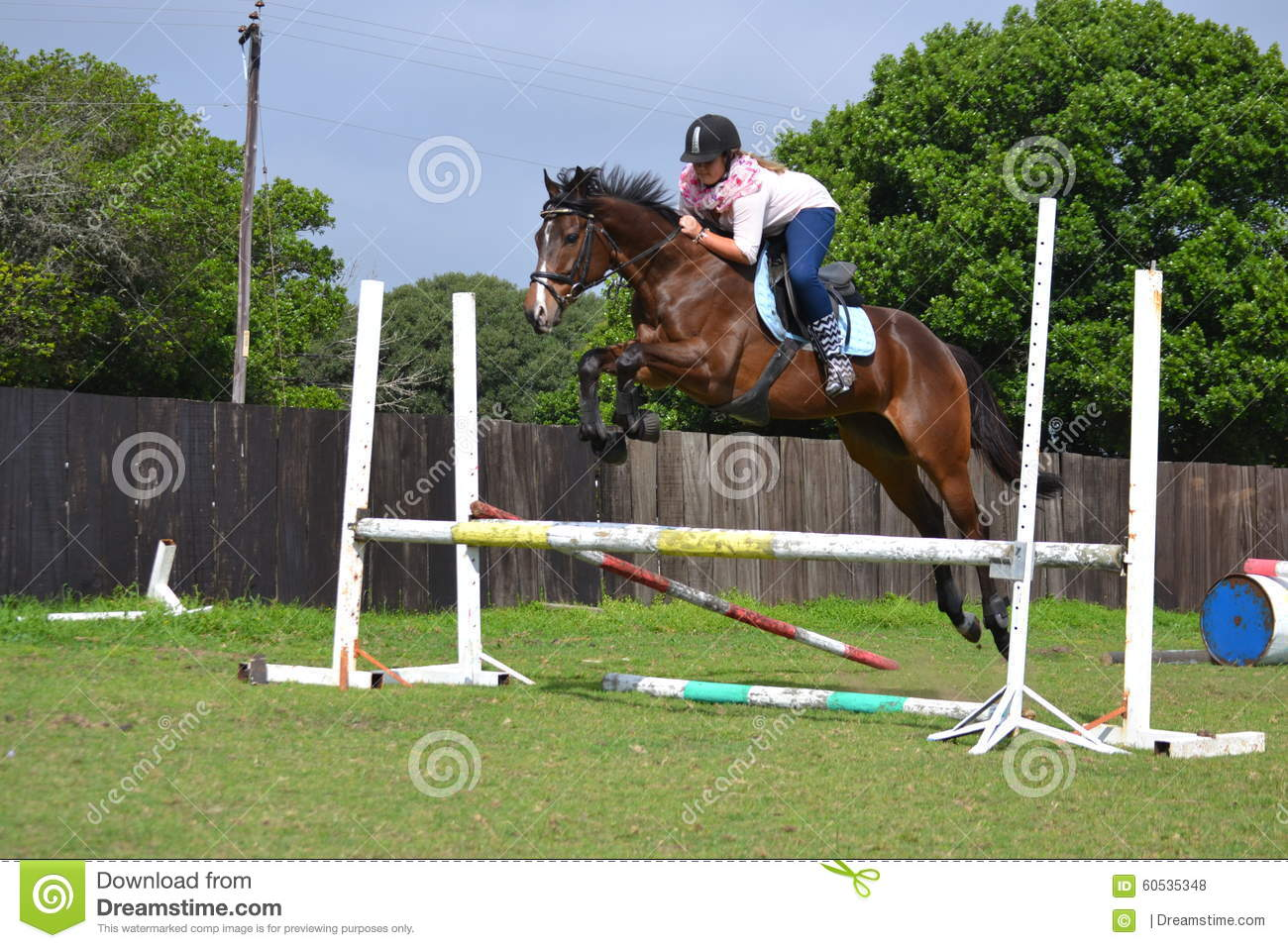 512 Bay Thoroughbred Jumping Photos Free Royalty Free Stock Photos From Dreamstime