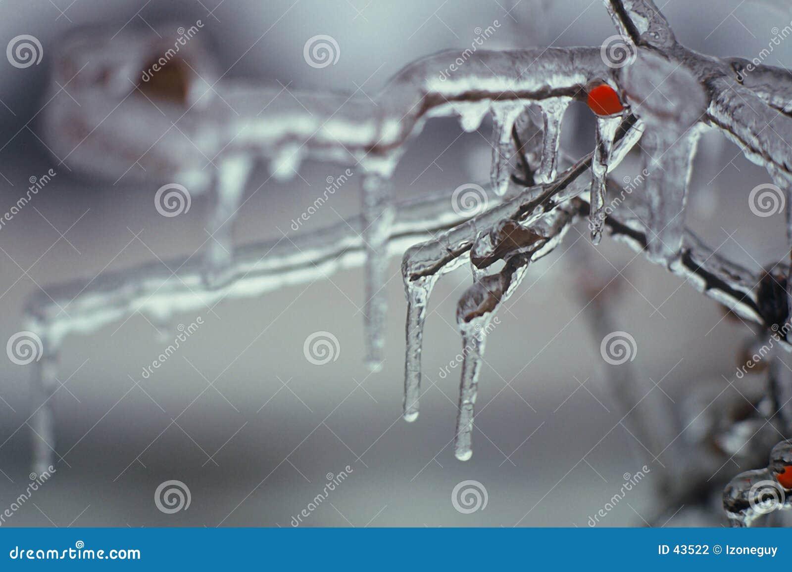 Download Baya congelada foto de archivo. Imagen de hielo, baya, cubo - 43522