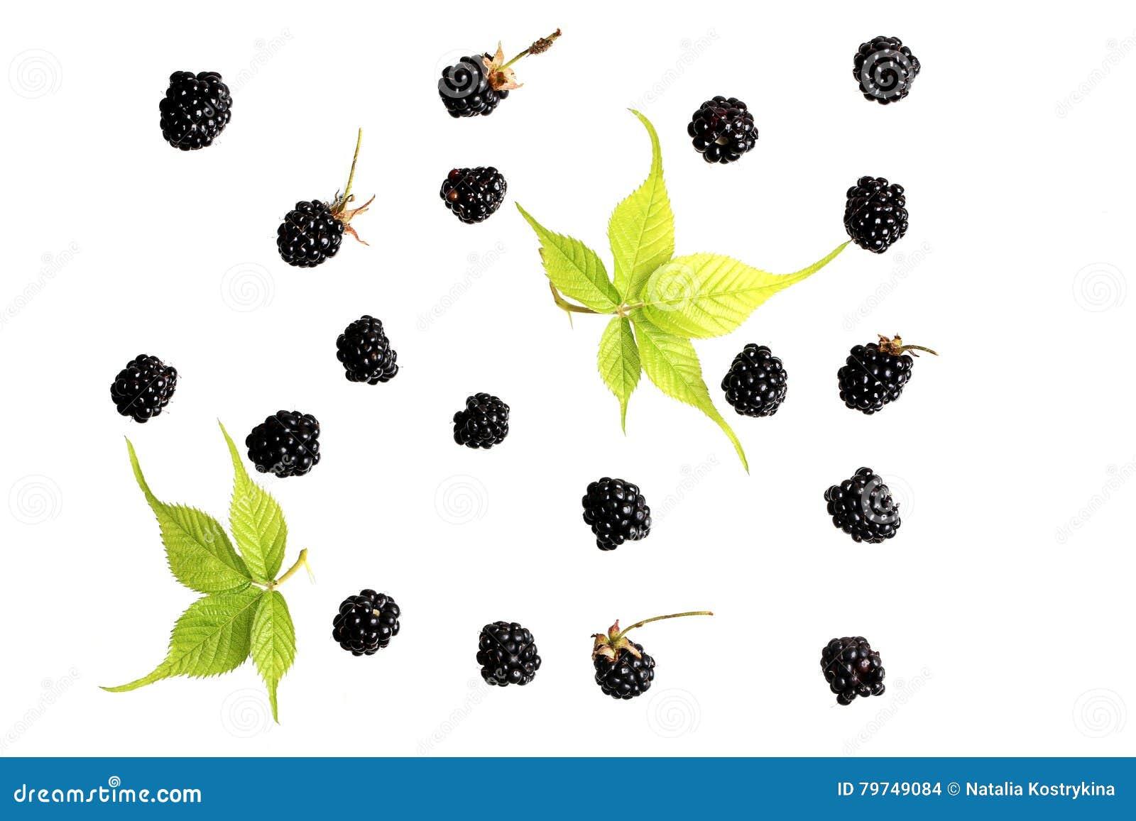 Baya de Blackberry en un fondo blanco