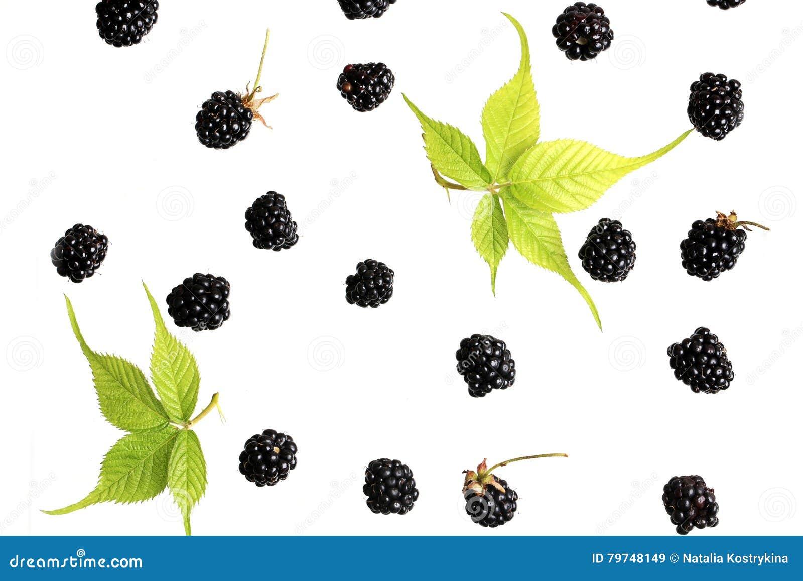 Baya de Blackberry en una opinión superior del fondo blanco de un modelo fresco de las bayas del verano plano del estilo