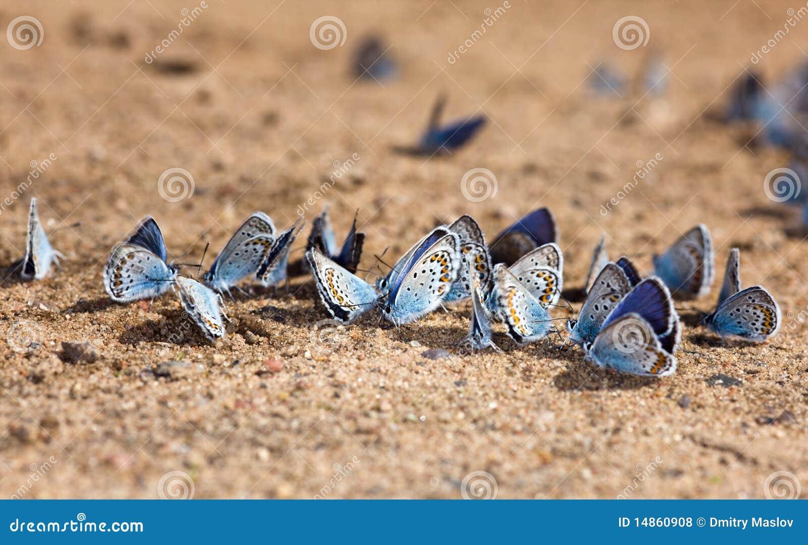 Beach for butterflies