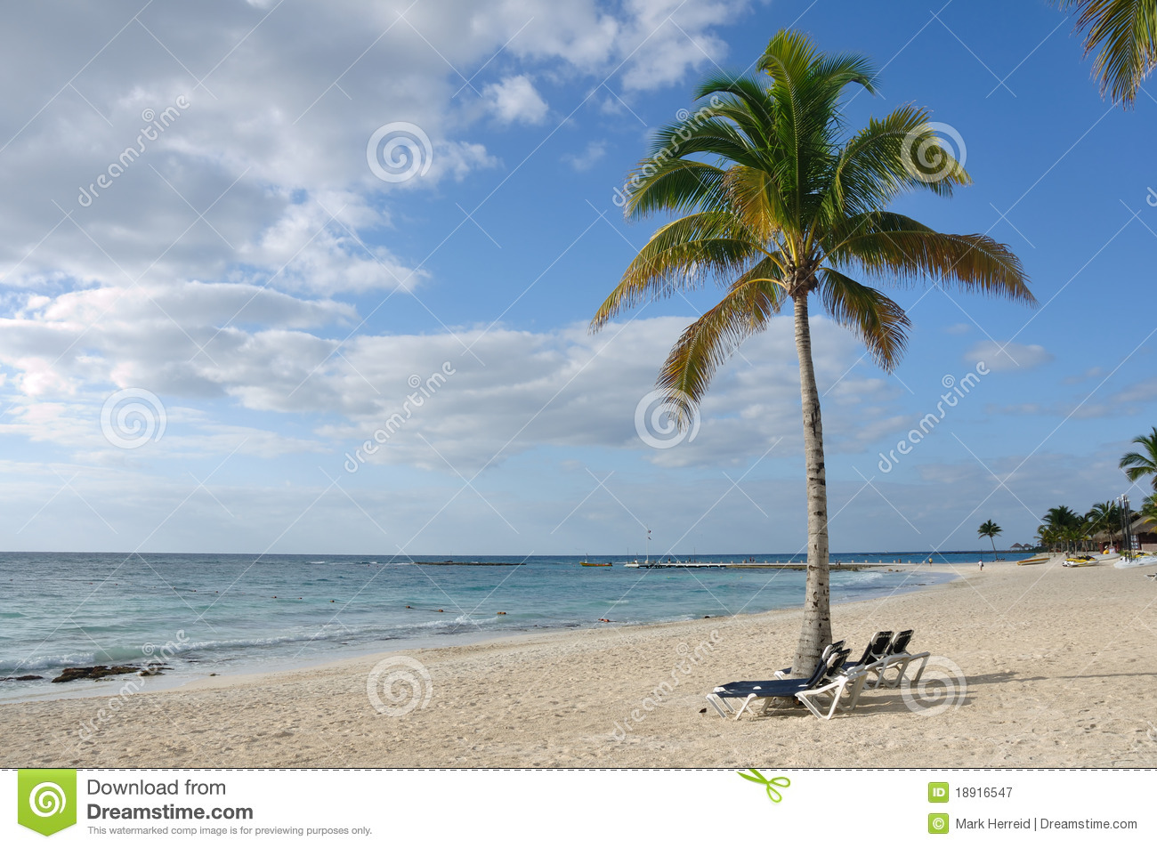 Beach chairs under palm tree on tropical beach stock image image beach chairs under palm tree on tropical beach voltagebd Image collections