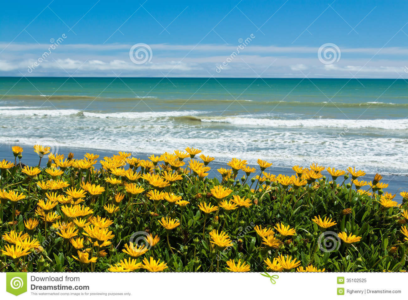 Wonderful bright yellow beach flower growing along a beach.