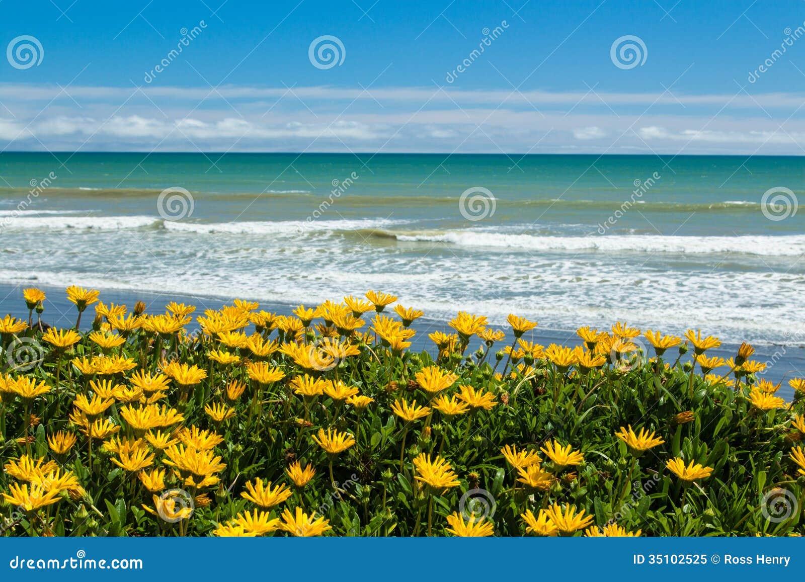 Beach Flowers Royalty Free Stock Photo - Image: 35102525