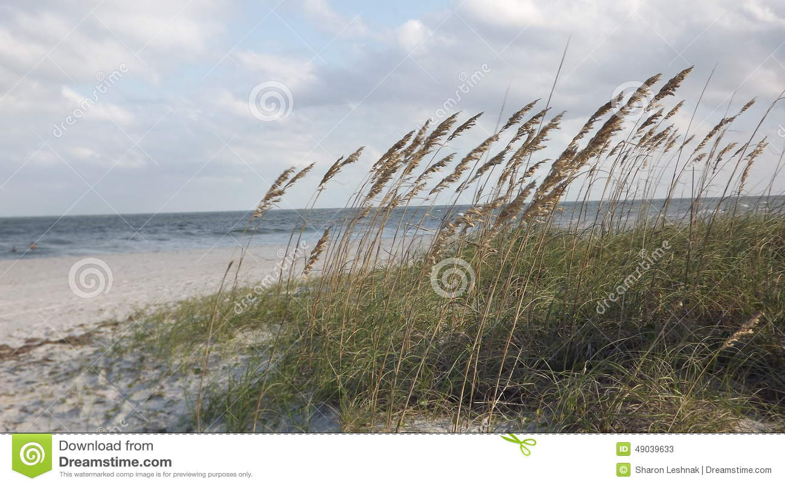 Beach Stock Photo Image 49039633