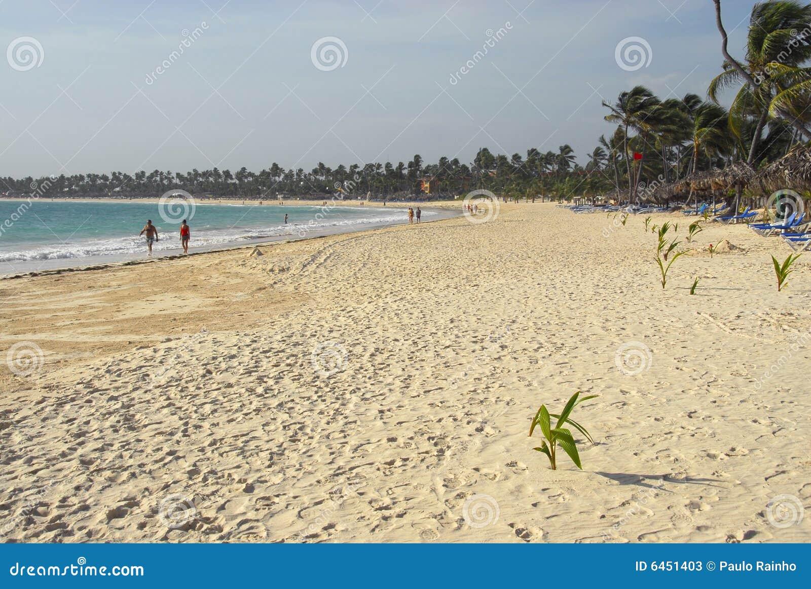 Beach kokosowych drzewa