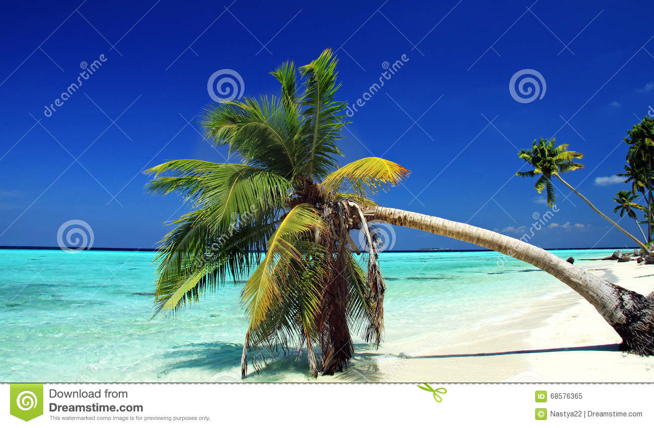 Beach Landscape In Indian Ocean Maldives Stock Photo - Image: 68576365