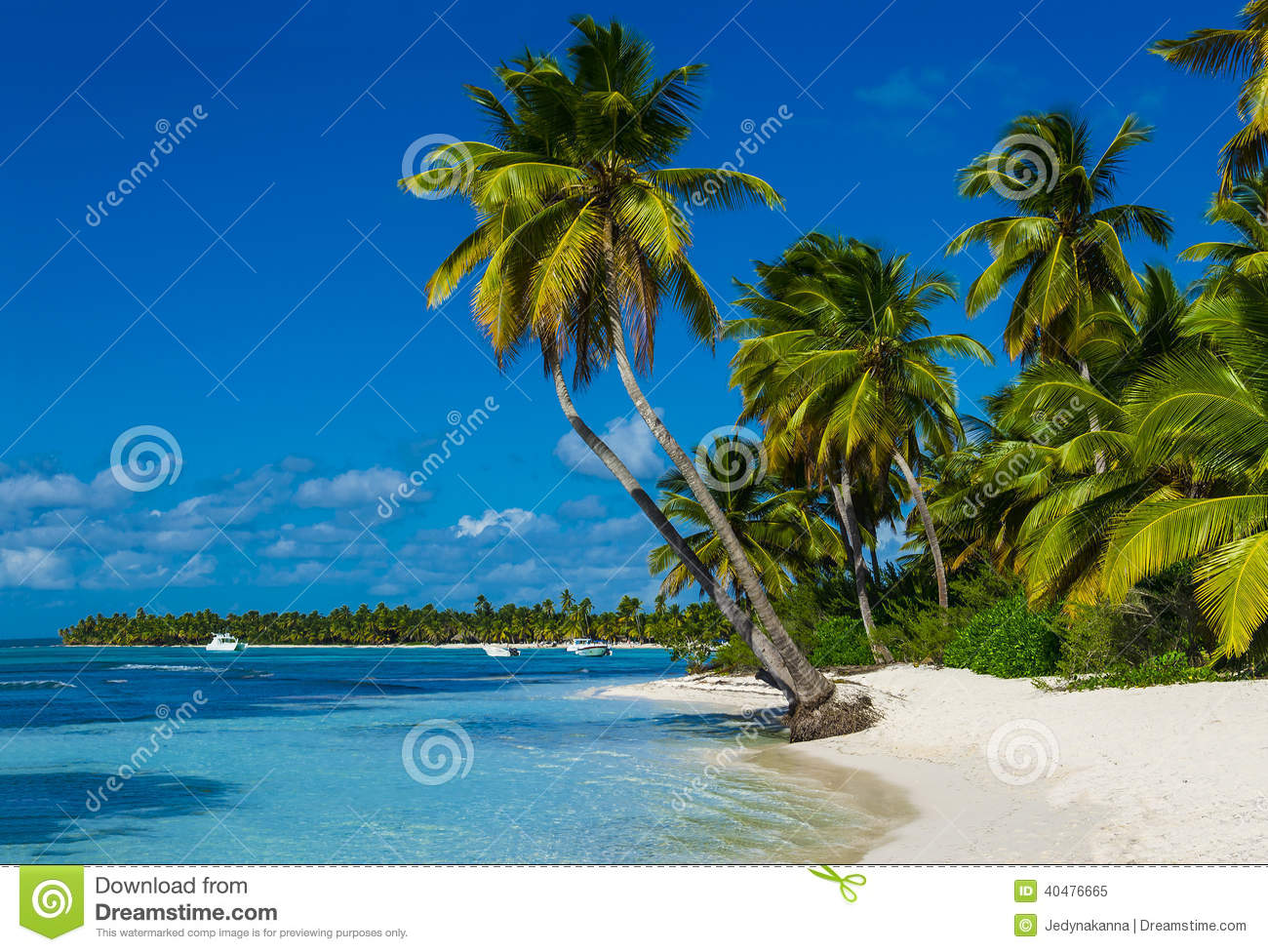 Beach with a lot of palms and white sand