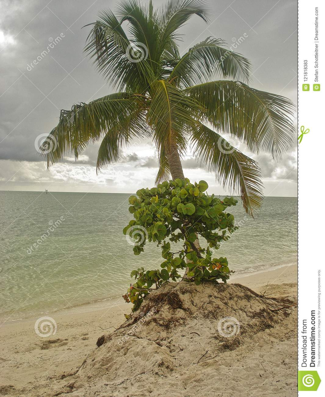 beach and palm and cloudy weather