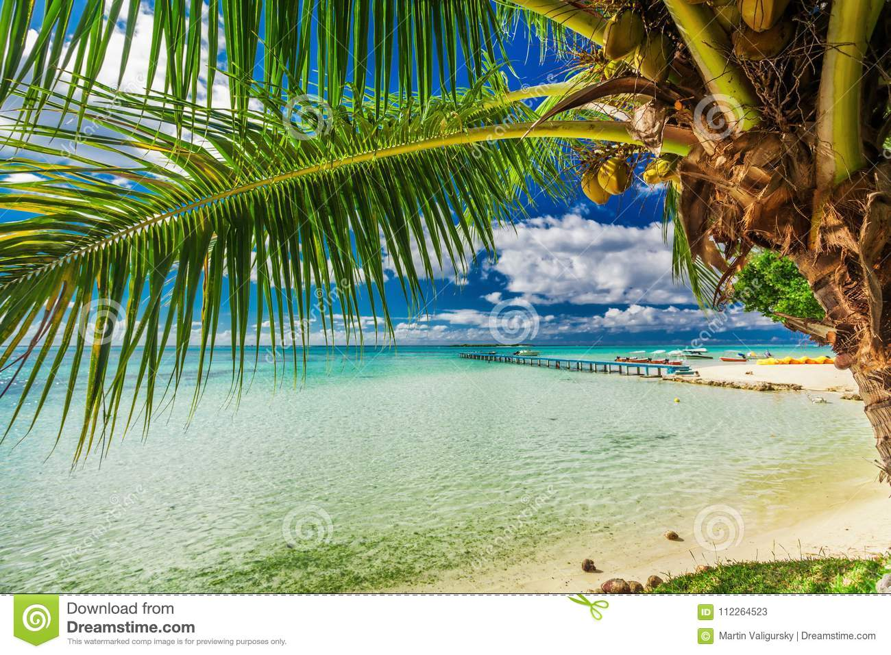 Beach With Palm Tree On The North Side Of Tropical Moorea