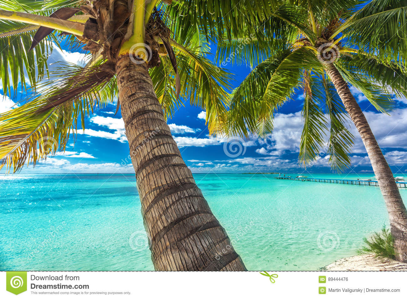 Beach With Palm Trees On The North Side Of Tropical Moorea