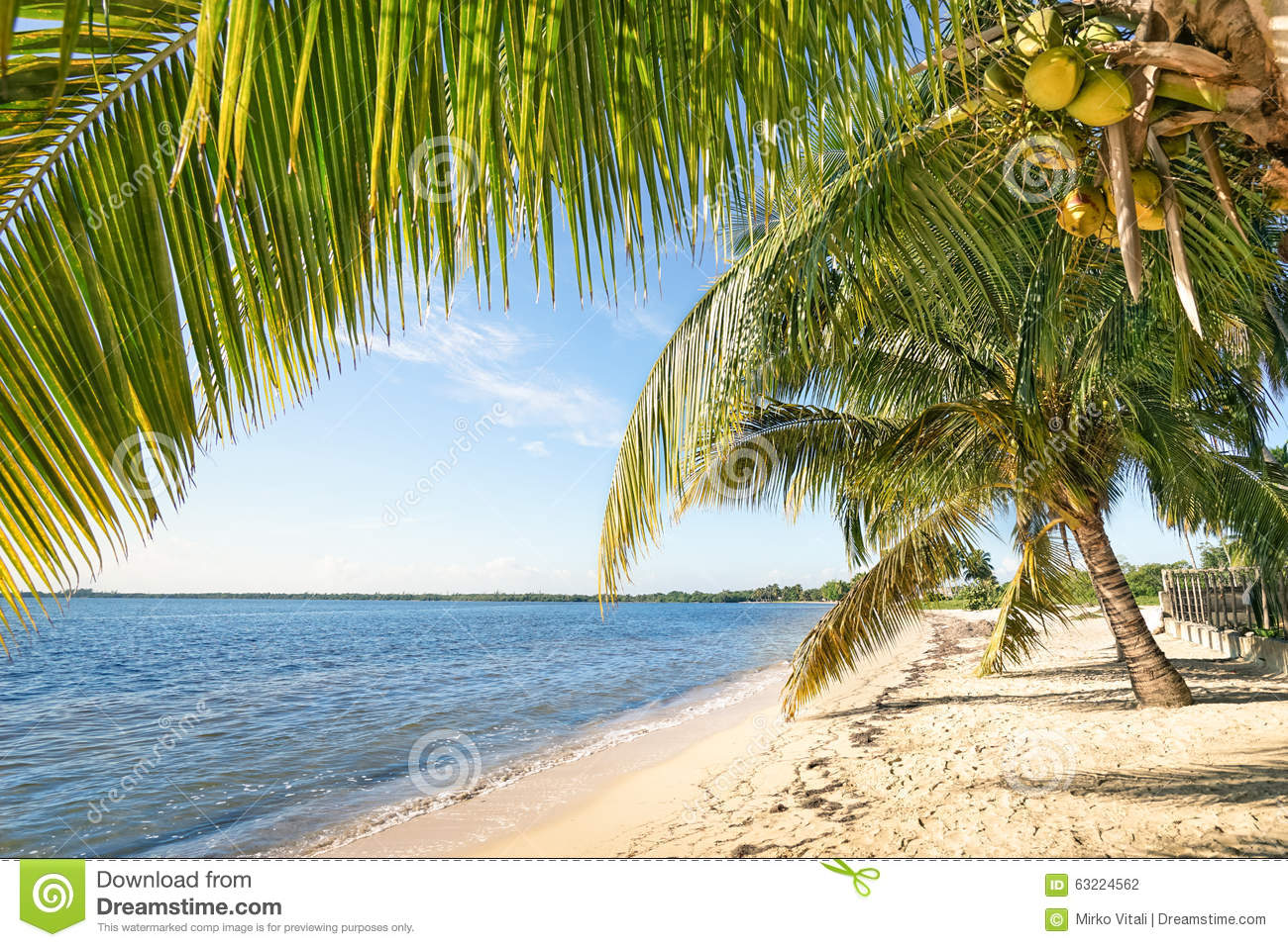 beach palm  turquoise sea  playa larga cuba stock