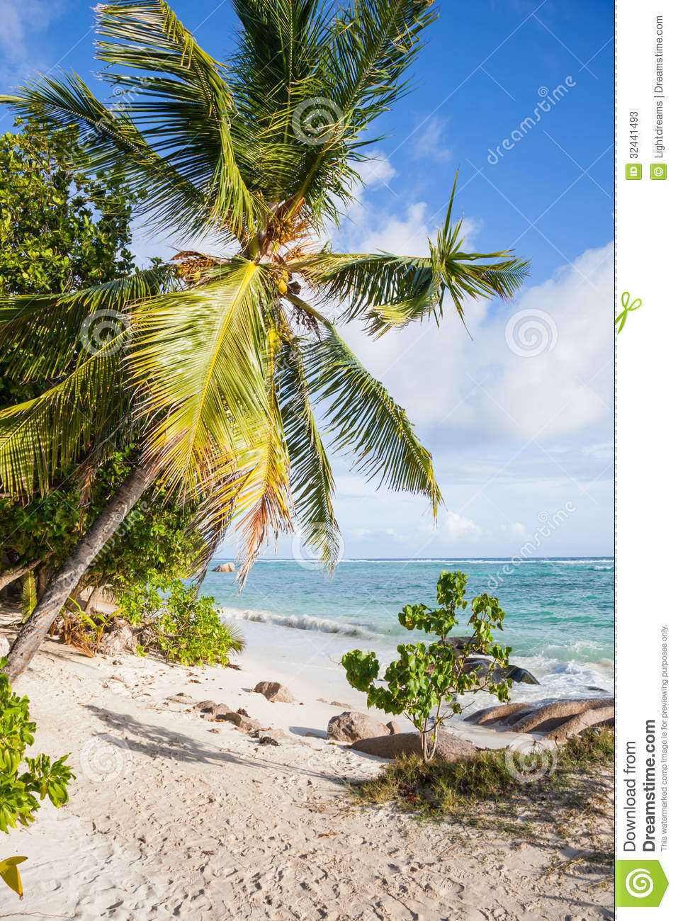Beach With Palms Stock Image. Image Of Leaf, Sand, Lagoon