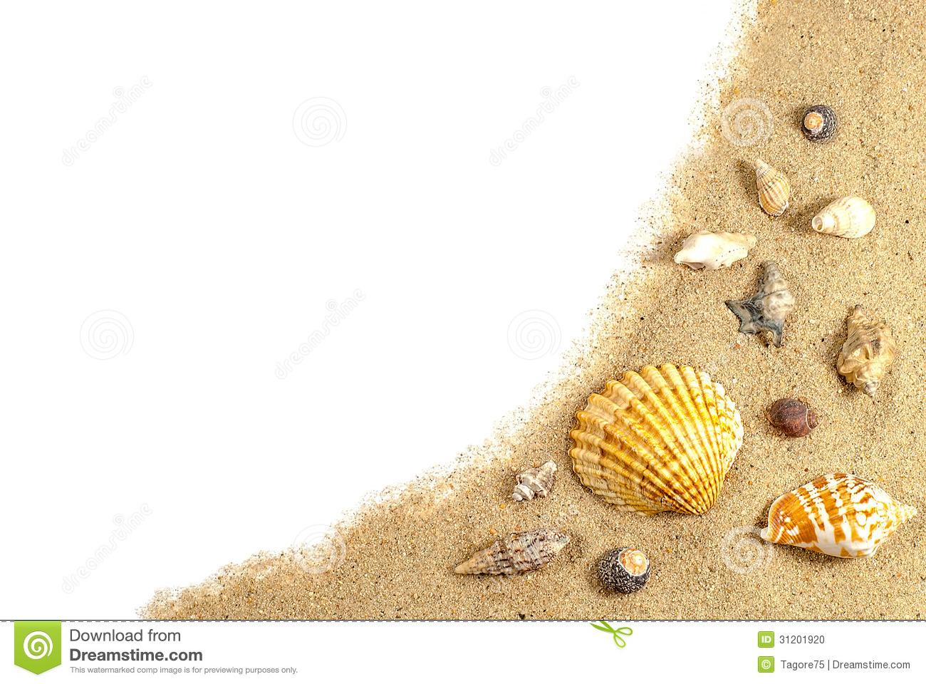 Beach sand and shells