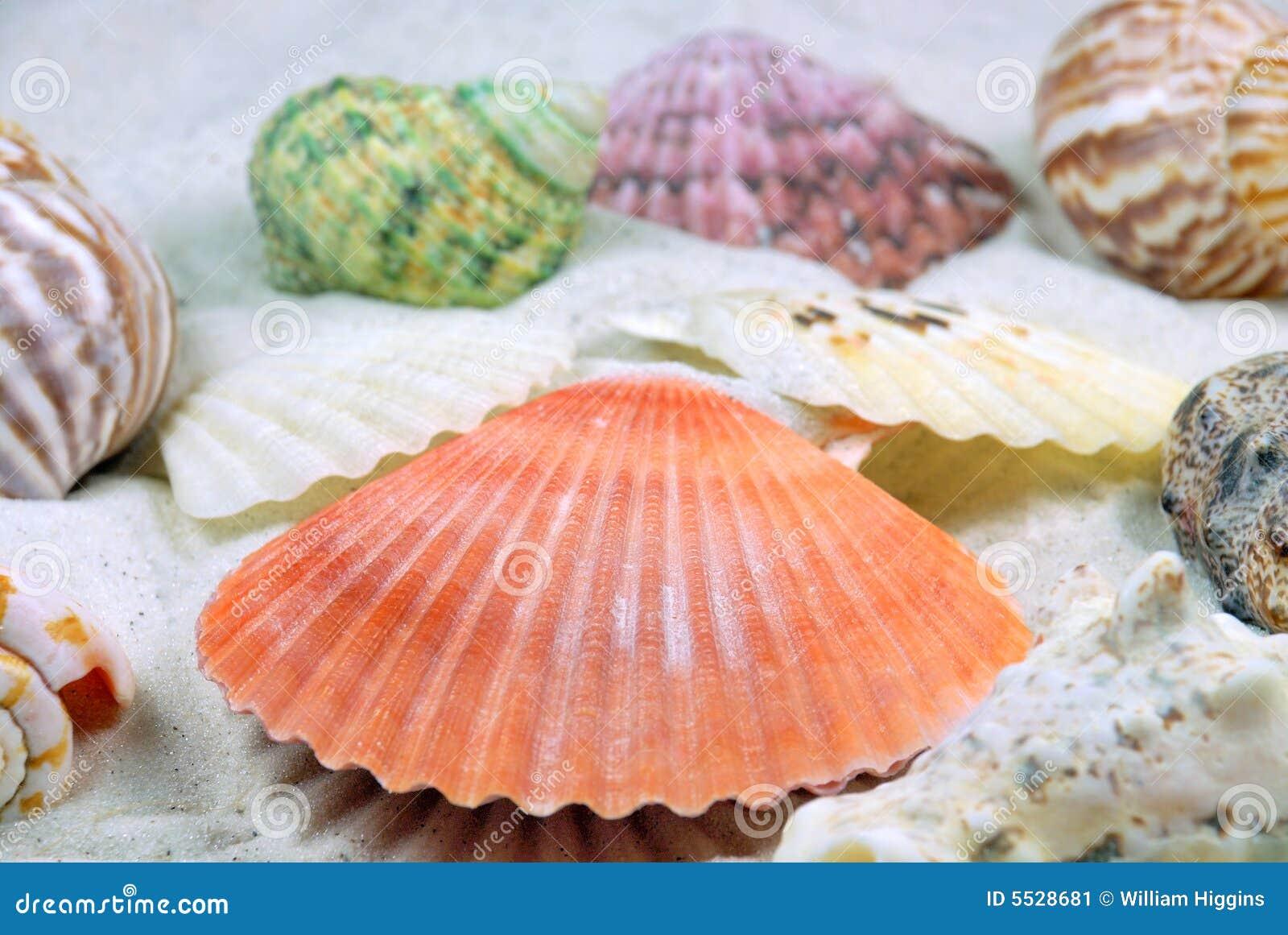 Beach Sea Shells Stock Image - Image: 5528681