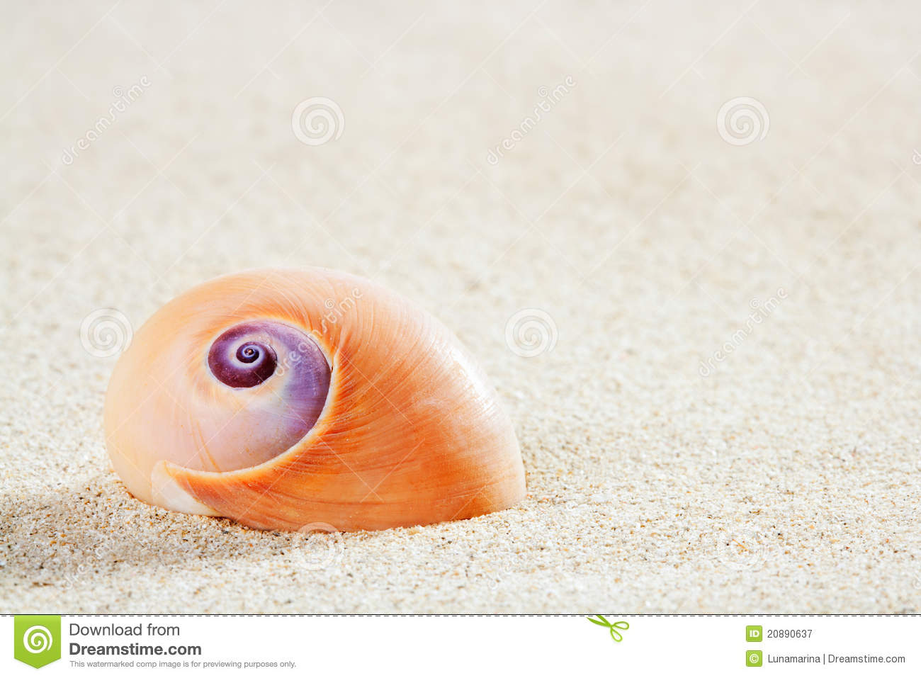 Download Beach Sea Snail Tropical White Sand Closeup Macro Stock Image - Image of golden, clean: 20890637