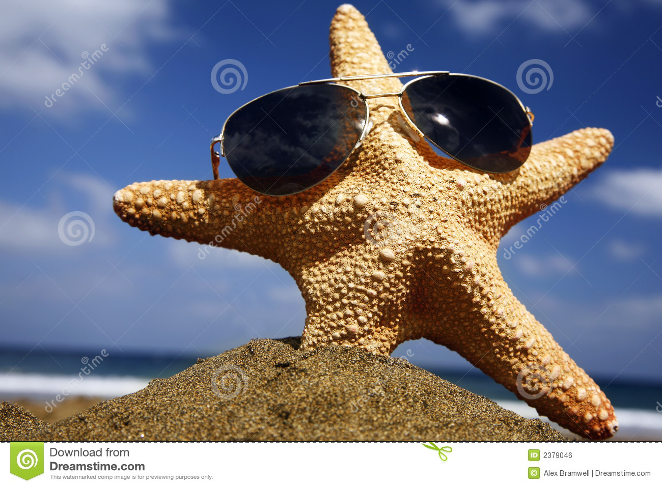 Beach Starfish with Shades stock photo. Image of sandy ...