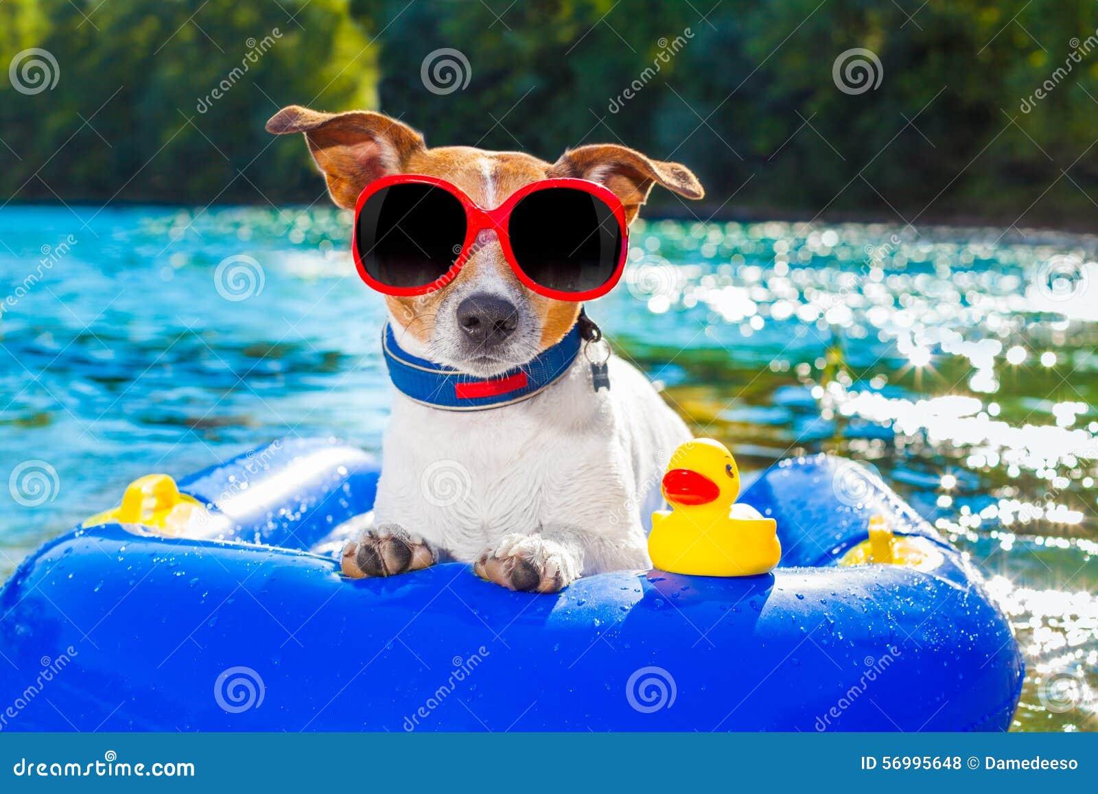 Jack Rubber Dog Toy