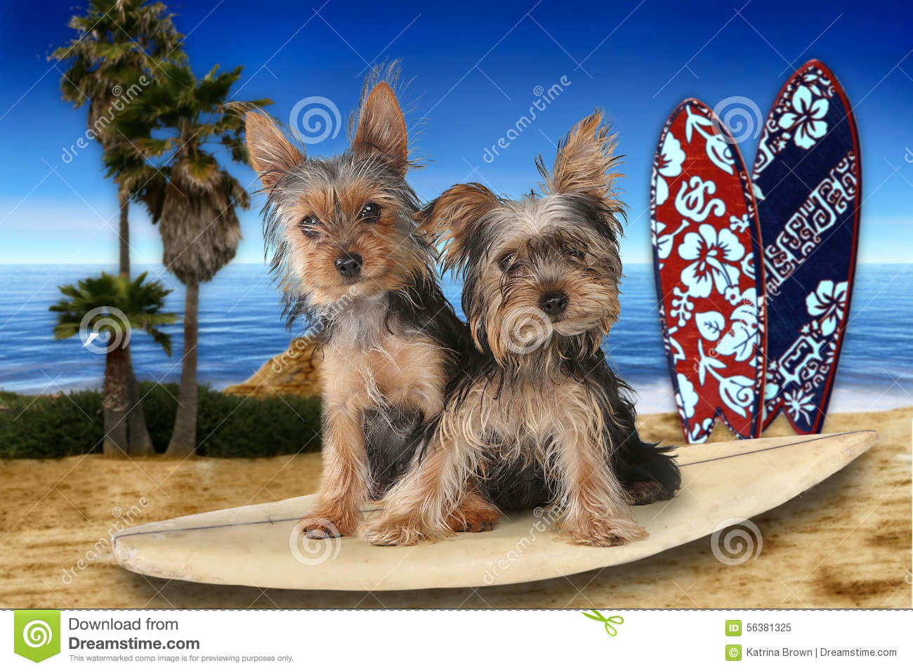 Beach Themed Yorkshire Terriers