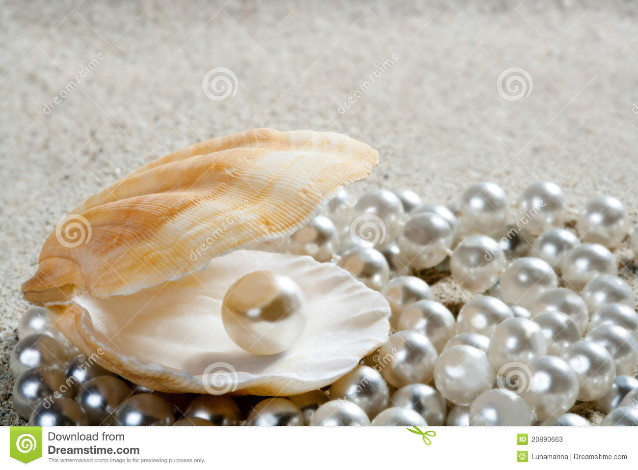 Clam Shell With Pearl | www.pixshark.com - Images ...