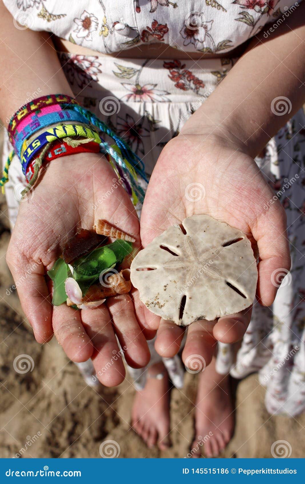 Beachcombing h?tet - Sand-Dollar, Oberteile u. Strand-Glas
