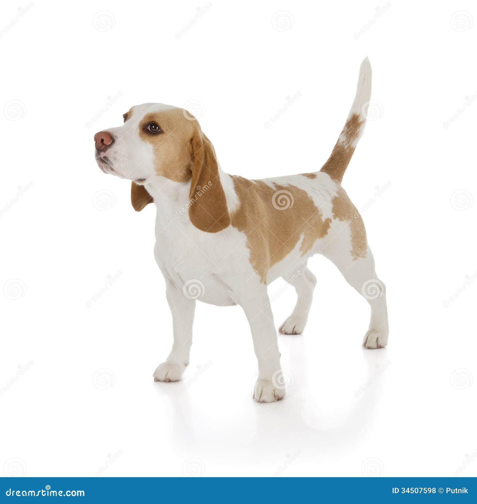 Training Dogs Zelda