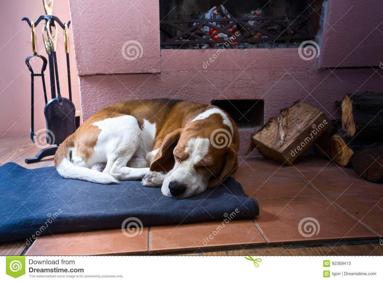 Beagle on the floor near the old fireplace .