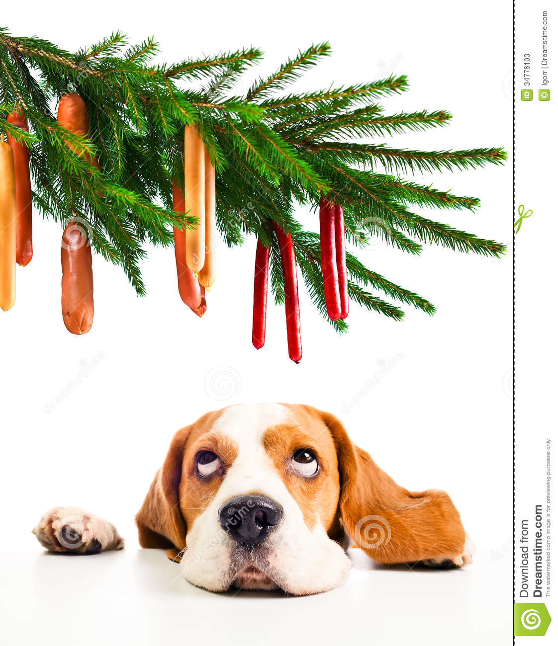 Beagle And Its Christmas Dreams Stock Image - Image of expression ...