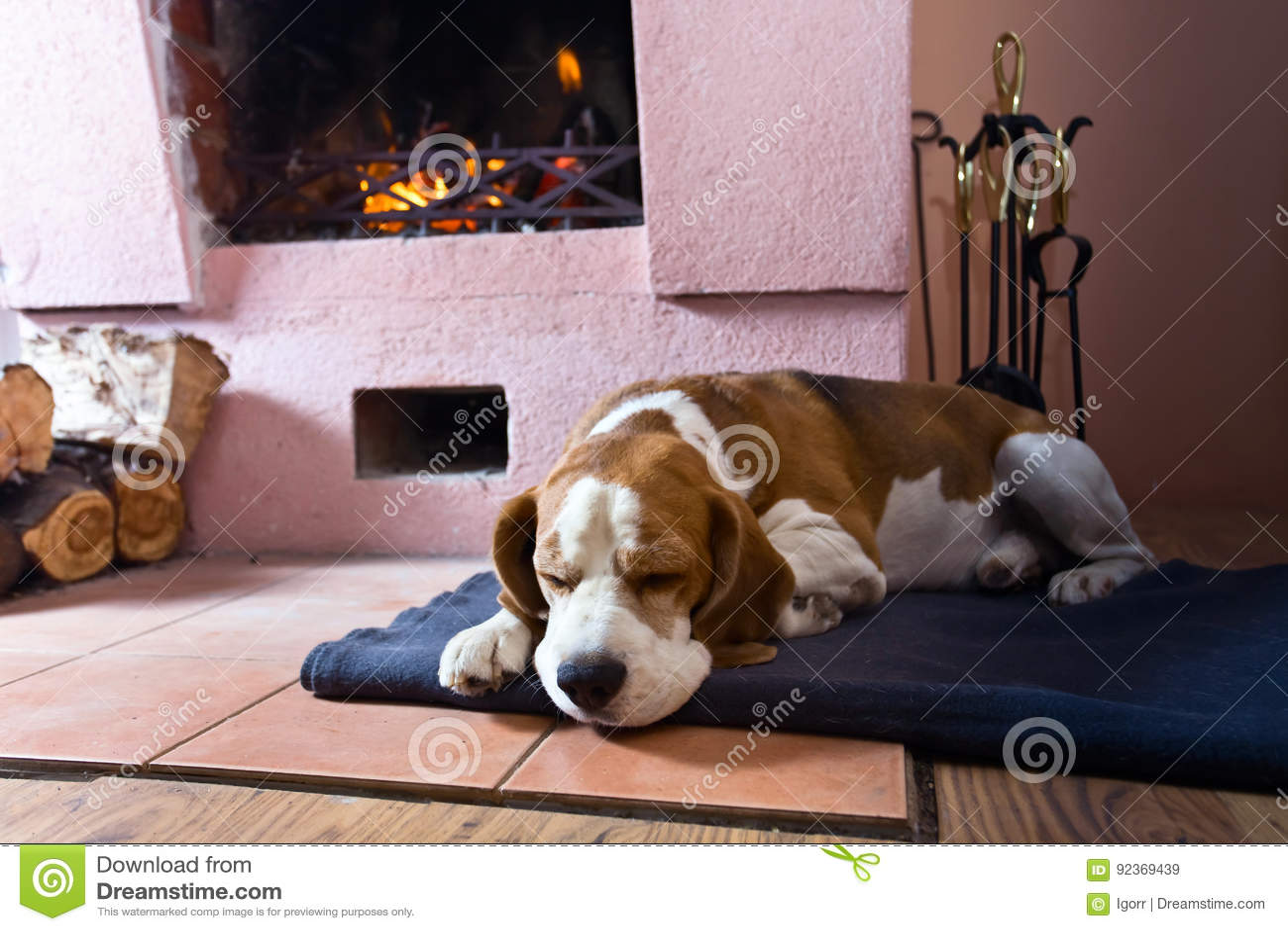 Beagle na podłoga blisko starej graby