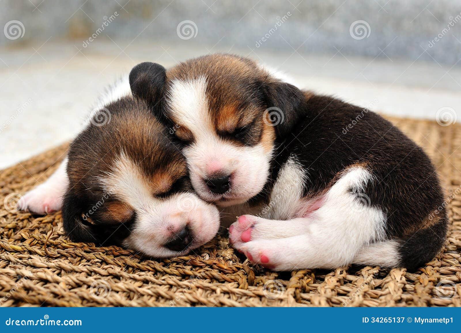 Free Dogs In Richmond Va