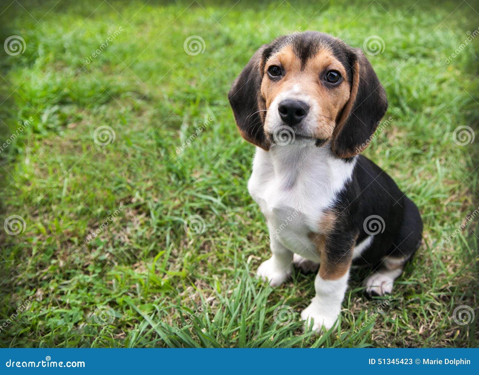 Dog Floppy Ears Video