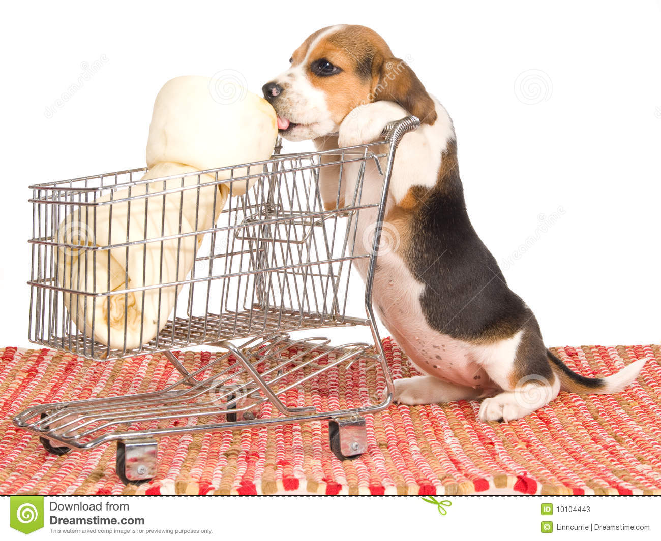 Beagle Puppy With Shopping Trolley Stock Image - Image of