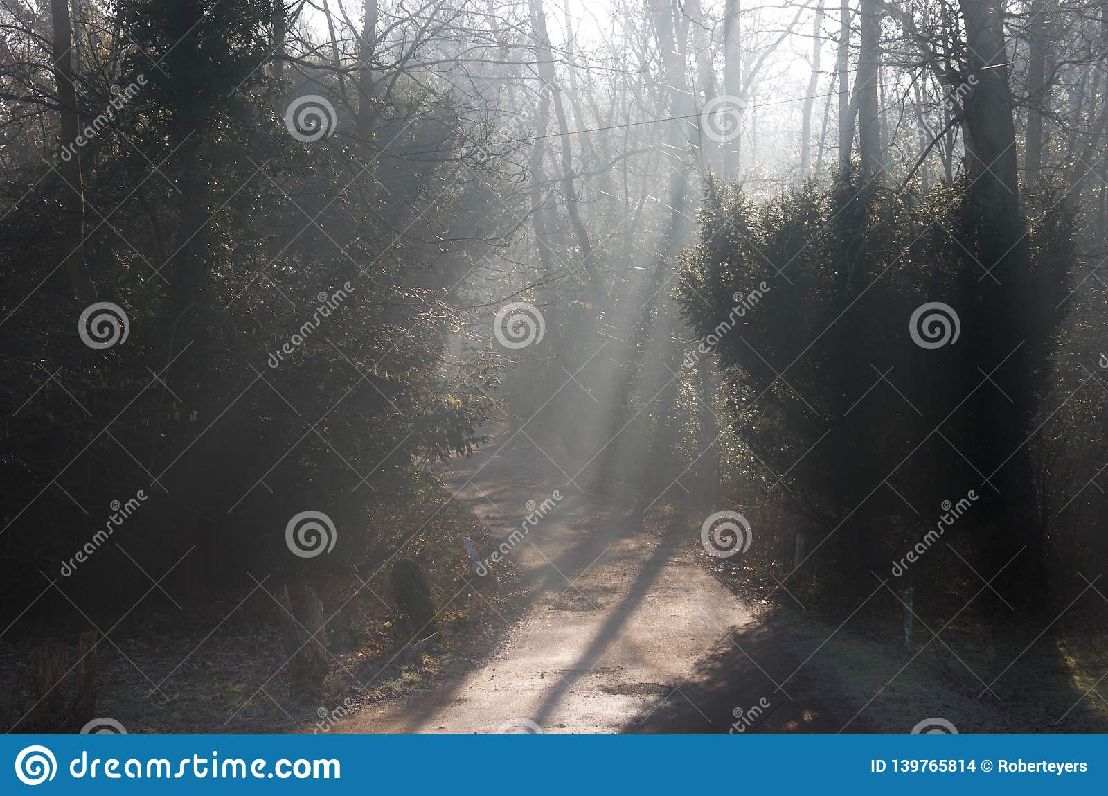 Beams of light on a road track through woodland forest: sunlight filtering through bare winter trees and mist