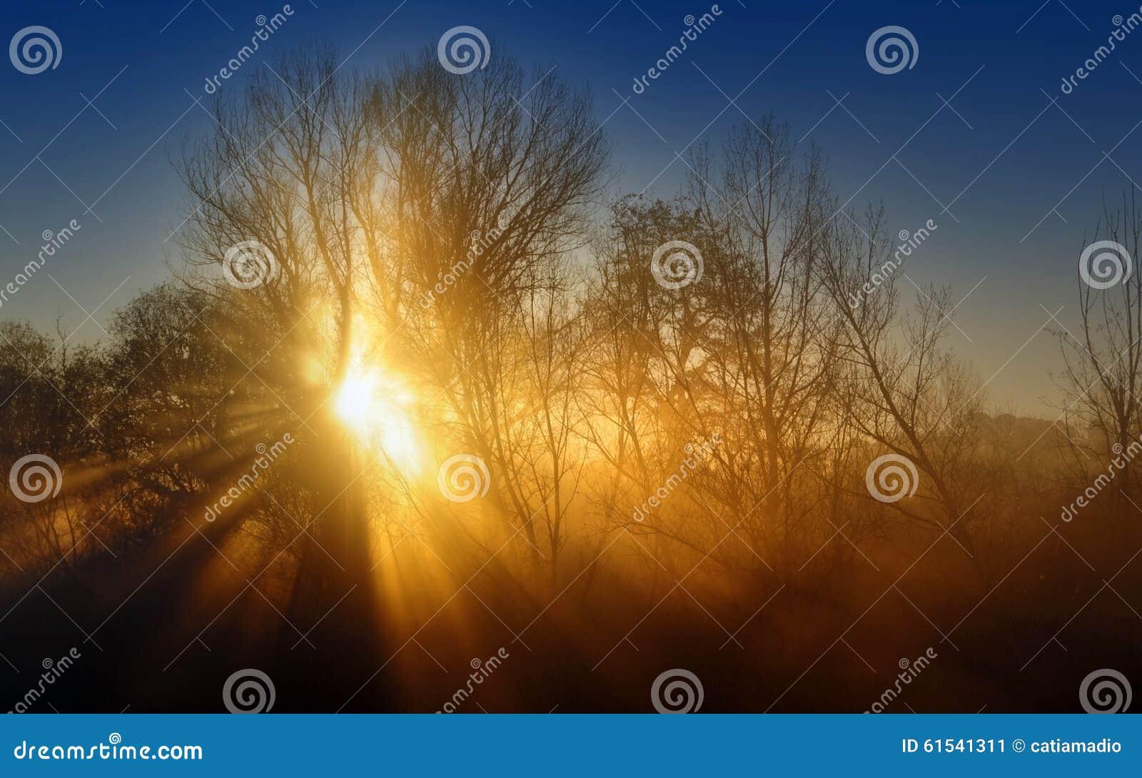 Beams of soft light
