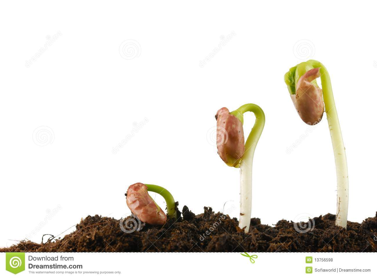 All About Bean Germination