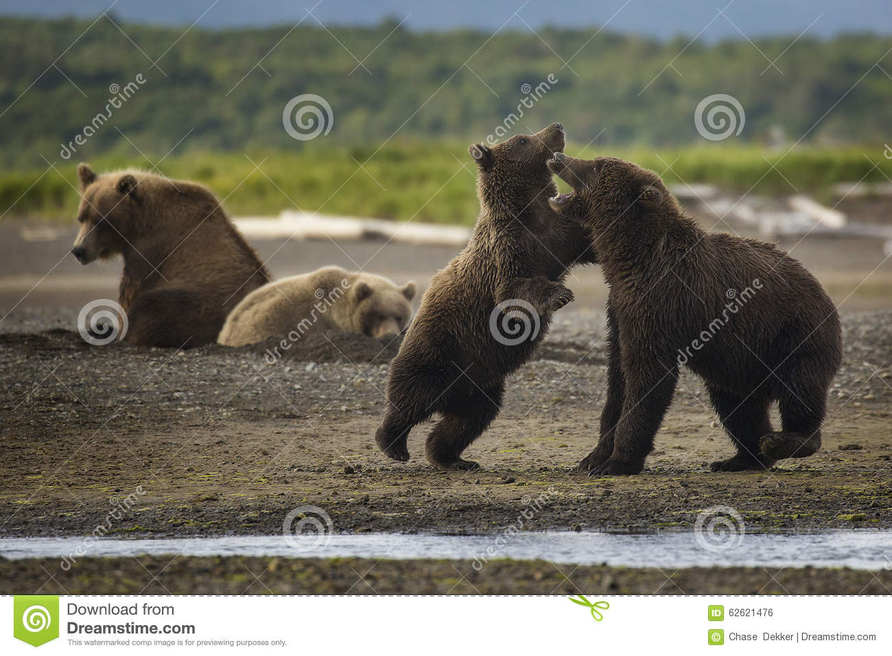The Bear Hang Out